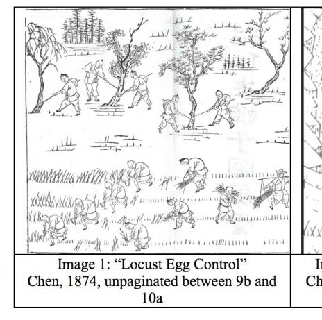 Images from the Manual of Locust Control by Chen Chongdi