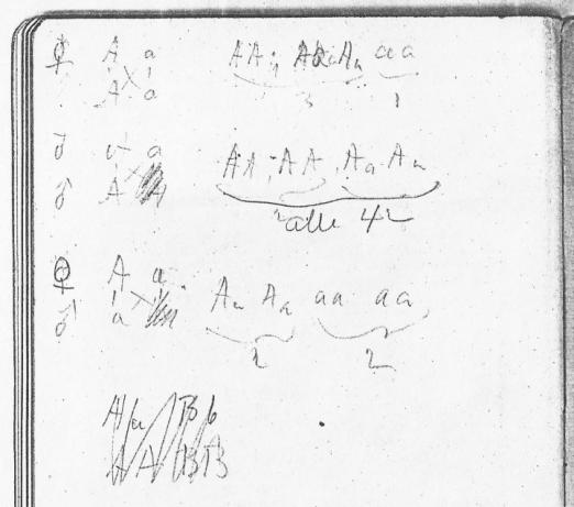 Verso side of back flyleaf of Tschermak's edition of Mendel's paper. Nilsson-Ehle is trying to work out the possible combinations between two pairs of alleles (A – a and B – b) and their numerical ratios, but fails, as is evident from deletions and abandoned attempts. Svalöv Weibull AB Research Library. Reproduced from a xerox copy that was made in 1998 by one of the authors (SMW). The company Savalöv Weibull AB was taken over by Lantmännen and the current whereabouts of the library are unknown.