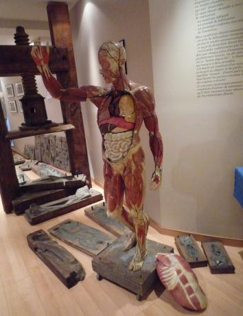 Molds used in model production of Auzoux's papier-mâché factory and a model of the male body. Musee de l'Ecorché, Le Neubourg. Photo: A. Maerker.