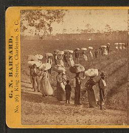 cotton_plantation_usa.