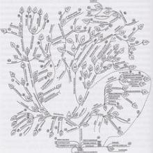 "Figure 1: ""The genealogical tree of world languages,"" compiled by Alexander Militarev based on research by the Moscow School of Comparative Linguistics including the author's own research on Afroasiatic/Afrasian/Semito-Hamitic macrofamily. Published as appendix 3 in the book: Alexander Militarev: The Jewish conundrum in world history. Academic Studies Press, Reference Library of Jewish Intellectual History, Boston 2010."